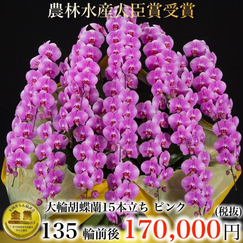 大輪胡蝶蘭15本立ち135輪ピンク
