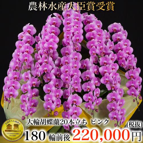大輪胡蝶蘭20本立ち180輪ピンク