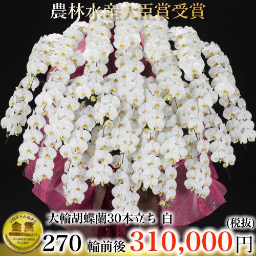 大輪胡蝶蘭30本立ち270輪白
