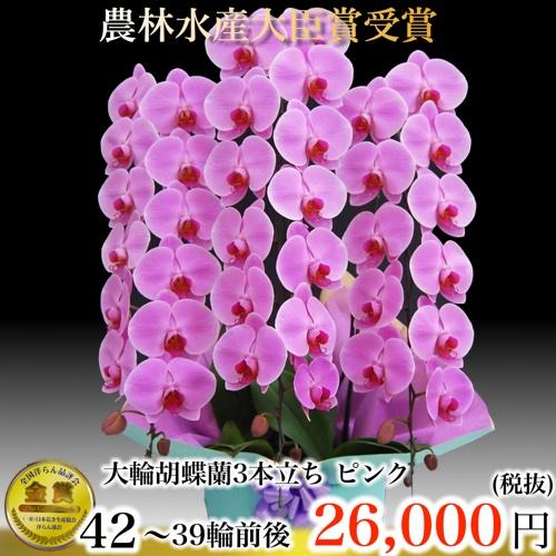 胡蝶蘭3本立ち39輪