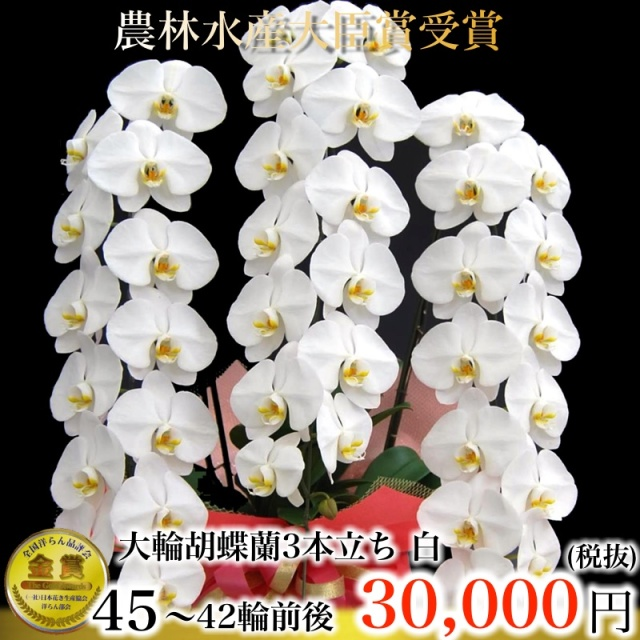 胡蝶蘭大輪3本立ち 白 42輪