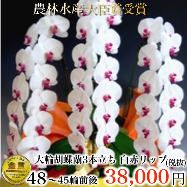 胡蝶蘭3本たち45輪リップ
