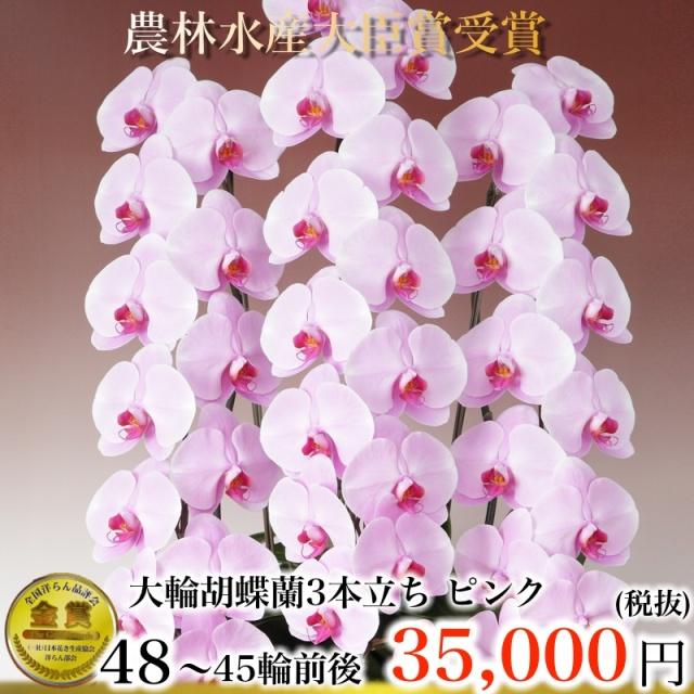 胡蝶蘭3本45輪ピンク
