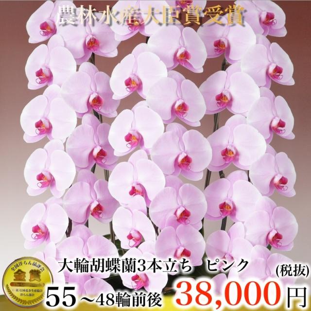 大輪胡蝶蘭3本立ち55輪から48輪ピンク