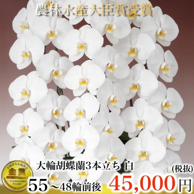 大輪胡蝶蘭3本立ち55輪から48輪白