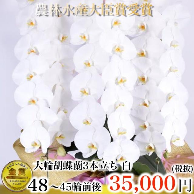 大輪胡蝶蘭3本立ち48輪から45輪白