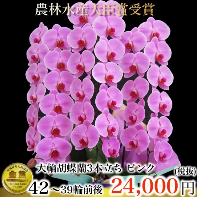 胡蝶蘭39輪ピンク