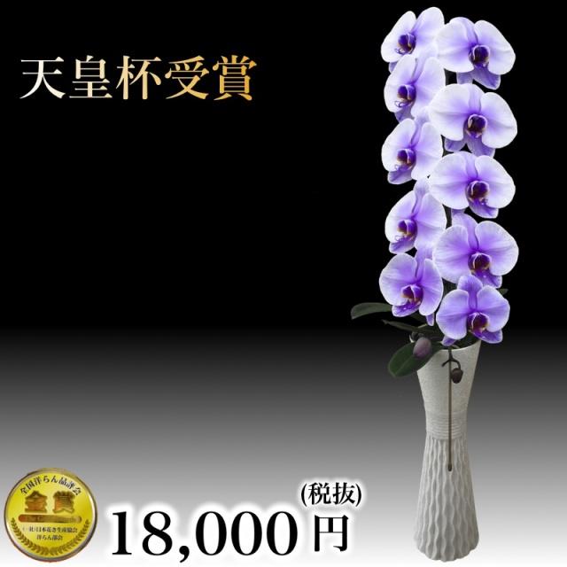 大輪胡蝶蘭1本立ちパープルエレガンス