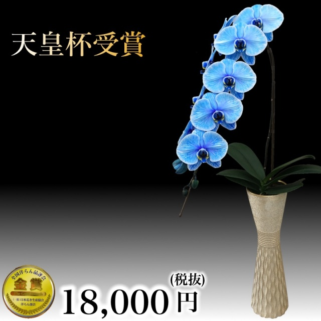 大輪胡蝶蘭1本立ちブルーエレガンス