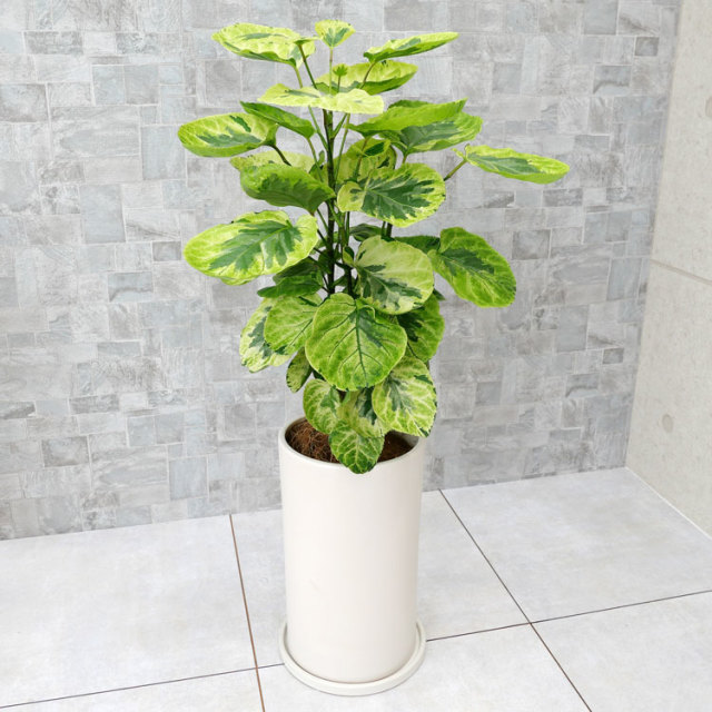 ポリシャス・キラメキ 陶器鉢植え・Mサイズ(マットシリーズ/シリンダー)