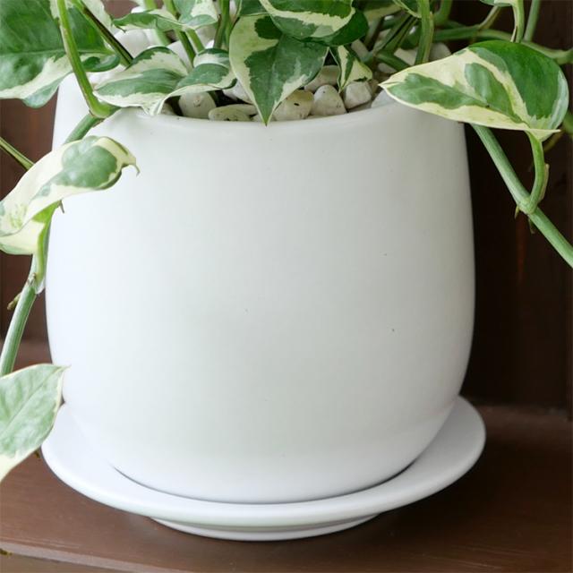 ポトス・エンジョイ 陶器鉢の写真(マットシリーズ/ボール)