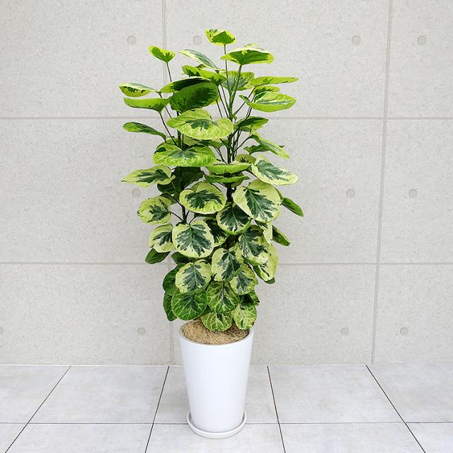 ポリシャス・煌(きらめき) 陶器鉢植え・Lサイズ(ラウンド)