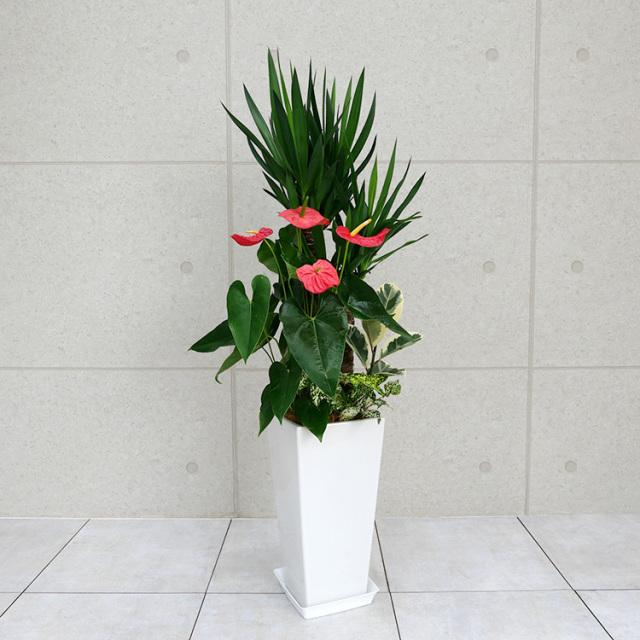 ユッカ(青年の木)の寄せ植え 陶器鉢植え・Lサイズ