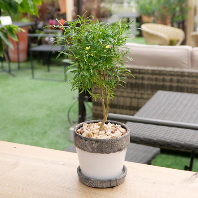 ガーデンポリシャス 陶器鉢植え・Mサイズ(ポプラント/ラウンド)