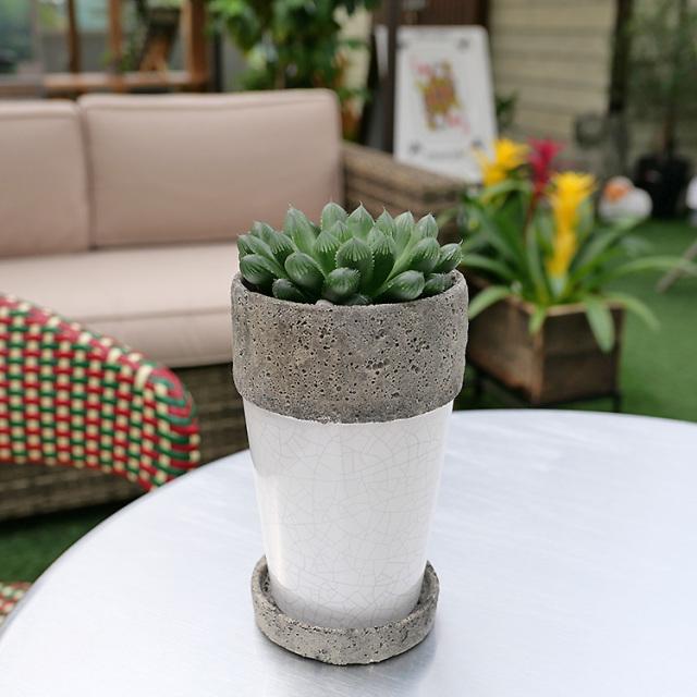 ハオルチア・クーペリー 陶器鉢植え・Sサイズ(ポプラント/トール)