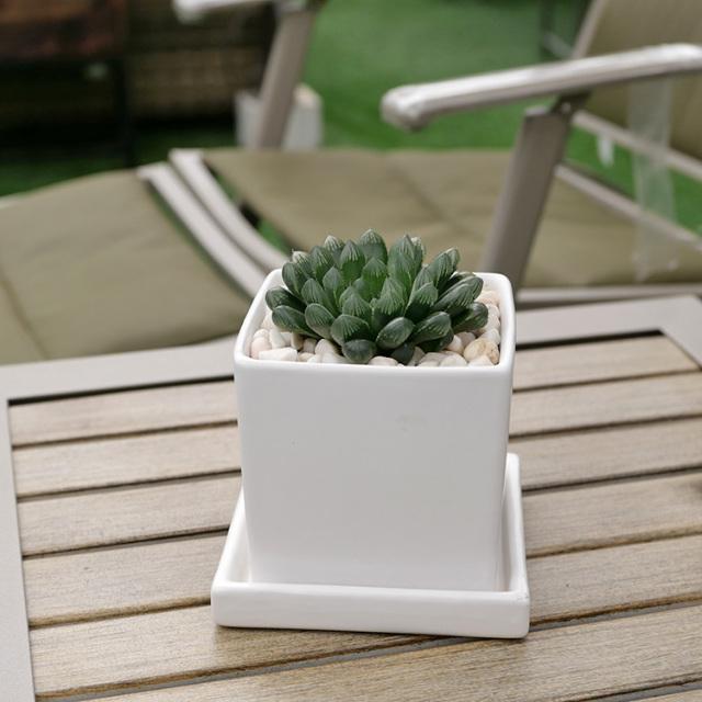 ハオルチア・クーペリー 陶器鉢植え・Sサイズ(マットシリーズ/キューブ)