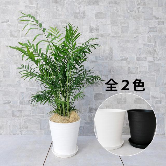 テーブルヤシ 7号セラート鉢