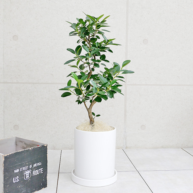 フランスゴム 陶器鉢植え・Mサイズ(マットシリーズ/シリンダー)