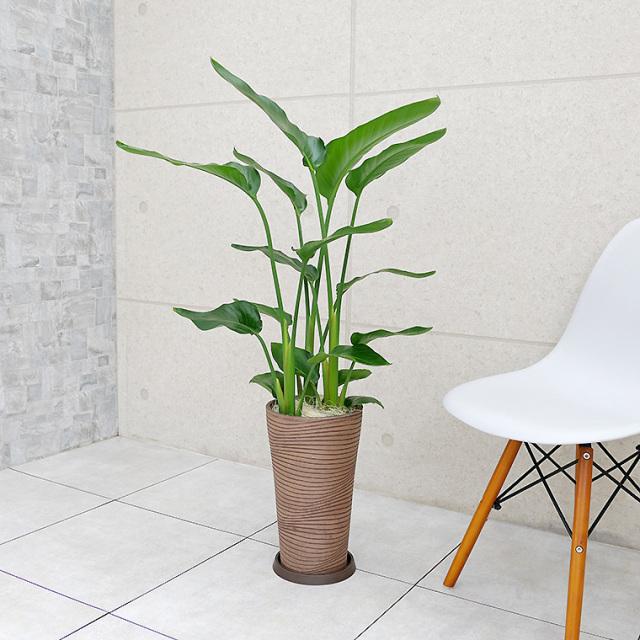 オーガスタ 樹脂製鉢植え(12AH22)