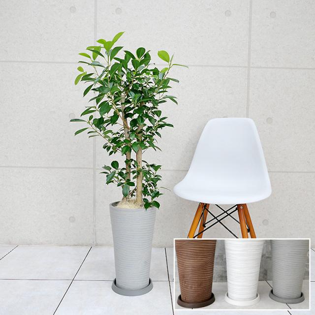 ガジュマル 樹脂製鉢植え(12AH22)