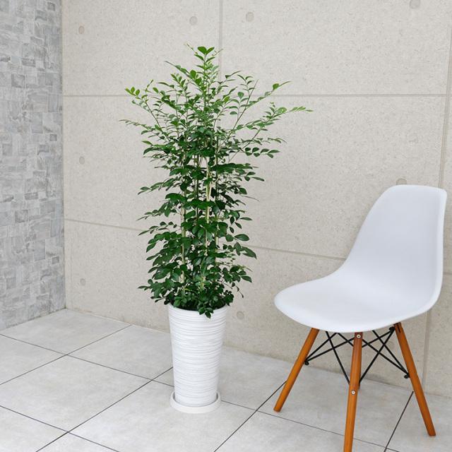 シルクジャスミン 樹脂製鉢植え(12AH22)