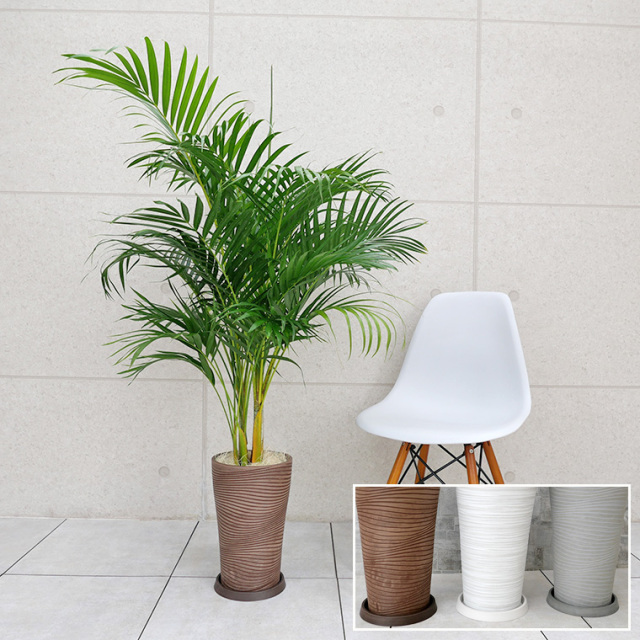 スーパーアレカヤシ 樹脂製鉢植え(12AH22)