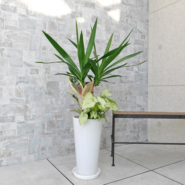 ユッカ(青年の木)の寄せ植え 陶器鉢植え・Sサイズ