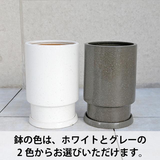 陶器鉢(フロウ/トール)