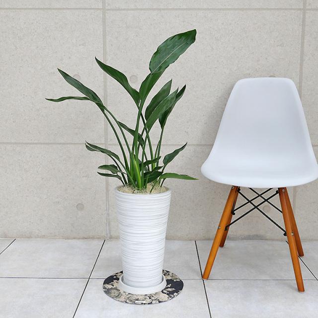 ストレチア・レギネ 樹脂製鉢植え(12AH22)