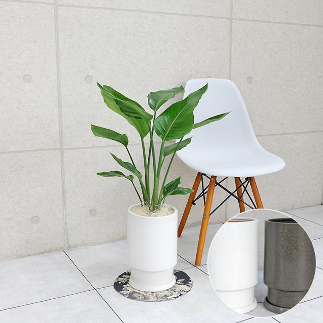 オーガスタ 陶器鉢植え・Mサイズ(フロウ/トール)