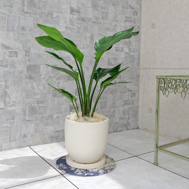 オーガスタ 陶器鉢植え・Mサイズ(マットシリーズ/シェッド)