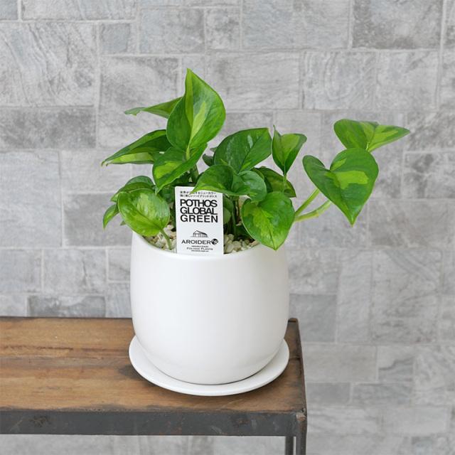 ポトス・グローバルグリーン 陶器鉢植え・Sサイズ(マットシリーズ/ボール)