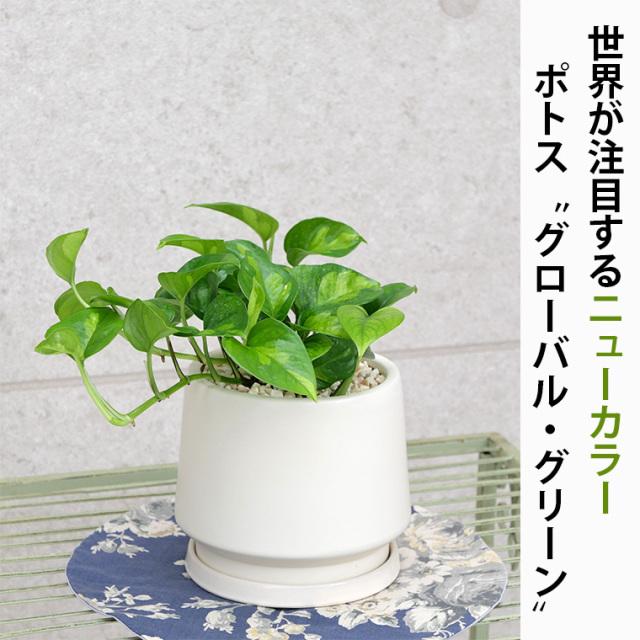 ポトス・グローバルグリーン 陶器鉢植え・Sサイズ(マットシリーズ/モルティ)
