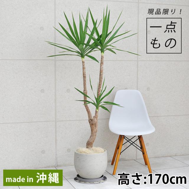 ユッカ-001 ファイバーセメント製鉢植え
