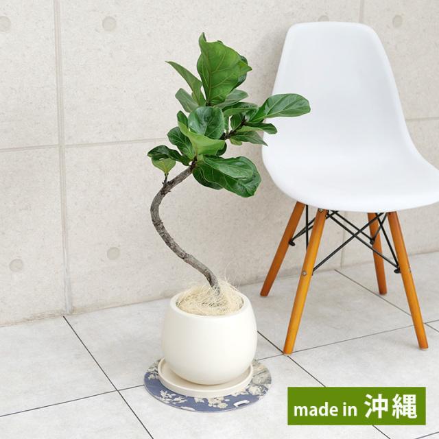 カシワバゴム 陶器鉢植え・Mサイズ(マットシリーズ/ムーン)