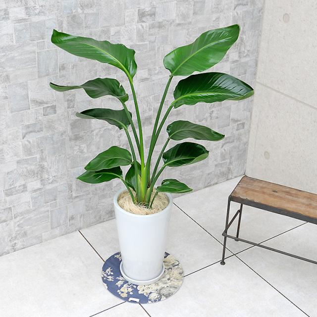 オーガスタ 陶器鉢植え・Mサイズ(ラウンド)