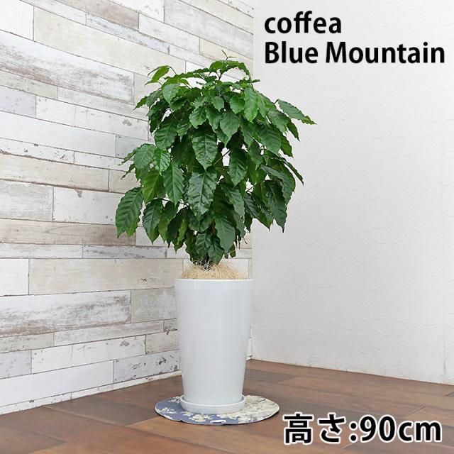 コーヒー 陶器鉢植え・Mサイズ(ラウンド)