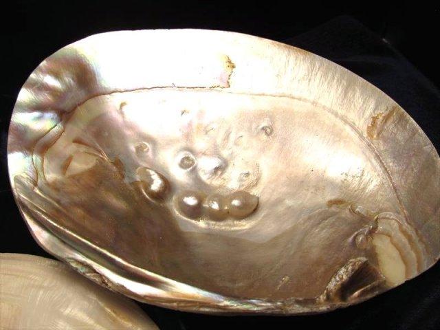 レインボーの輝き 天然淡水パール付き ナチュラルな貝殻 激安 浄化用の器として使うとステキです パール付きイケチョウガイ皿 サイズ約14-19cm