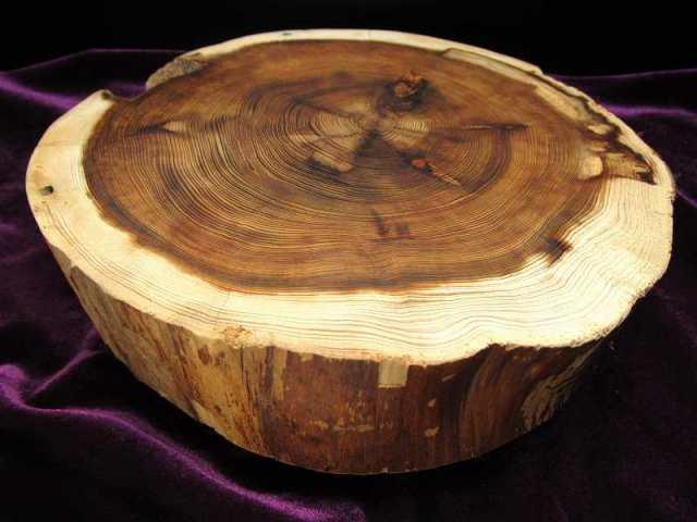 家康公 見返りの大杉(皮付) 台座 全幅約200mm 重さ508g 樹齢450年の杉使用 置物や原石のディスプレイに 天然木製楕円型・原石用台座 一点もの 7回目の11個中の2番 愛知県産 証明書付き
