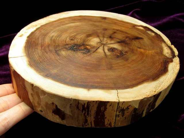 家康公 見返りの大杉(皮付) 台座 全幅約192mm 重さ521g 樹齢450年の杉使用 置物や原石のディスプレイに 天然木製楕円型・原石用台座 一点もの 7回目の11個中の3番 愛知県産 証明書付き