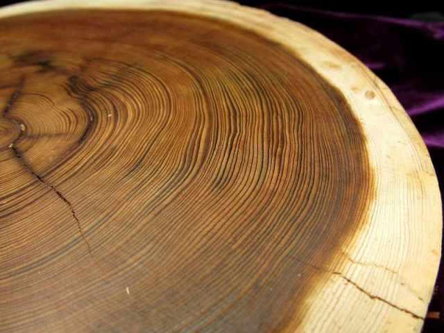 家康公 見返りの大杉(皮付) 台座 全幅約200mm 重さ596g 樹齢450年の杉使用 置物や原石のディスプレイに 天然木製楕円型・原石用台座 一点もの 7回目の11個中の9番 愛知県産 証明書付き