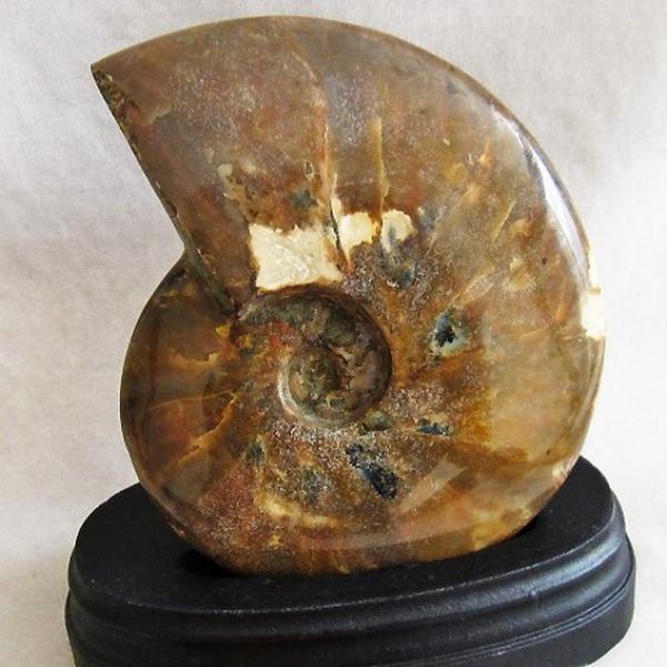 虹入り アンモナイト 化石 Ammonite [M114-128]