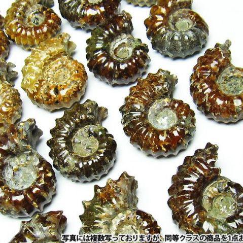 画像現物/★セット割対象品!★ アンモナイト化石 Ammonite [M407-2]
