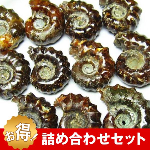 アンモナイト化石  詰め合わせ お買い得セット  《rv》[M450-1]