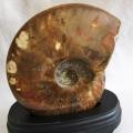 1.6Kg 虹入り アンモナイト 化石 [M114-157]