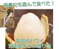【送料無料】プリンセスグリーンライチ(妃子笑)