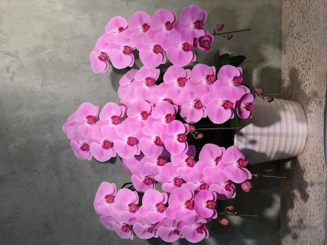 【11】 5本立・ピンク