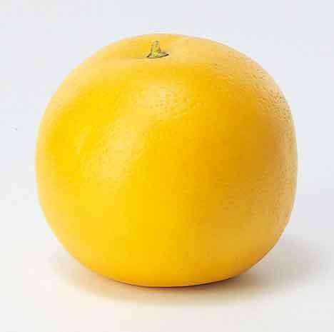 本物そっくり!果物単品(合成樹脂製)・グレープフルーツ