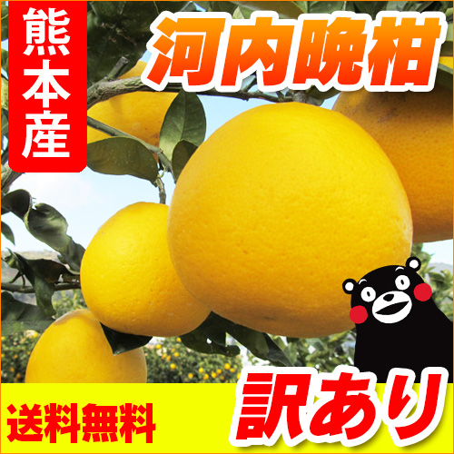 熊本県産河内晩柑