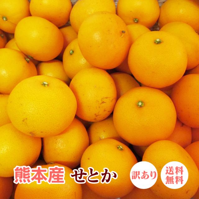 【 送料無料 】 熊本産 せとか 訳あり 20kg(10kg×2箱) 【 九州 熊本 柑橘 みかん セトカ 】